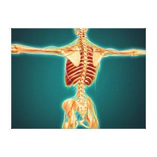 Vista trasera del esqueleto humano con el sistema impresión en lona