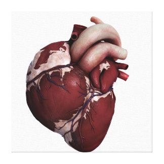 Vista tridimensional del corazón humano, delantera impresiones en lona estiradas