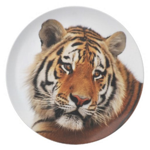 Vistazo del lado de los tigres platos