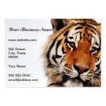 Vistazo del lado de los tigres plantillas de tarjeta de negocio