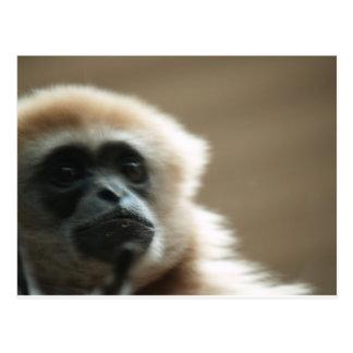 Vithandad gibbon postcard