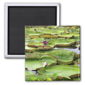 Vitoria Regis, giant water lilies in the Amazon 2 Inch Square Magnet