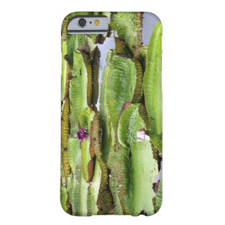 Vitoria Regis, giant water lilies in the Amazon Barely There iPhone 6 Case