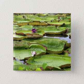 Vitoria Regis, giant water lilies in the Amazon Button