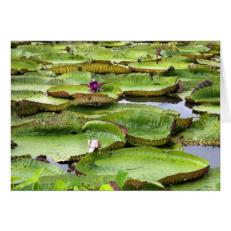 Vitoria Regis, giant water lilies in the Amazon Card