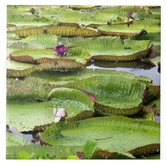 Vitoria Regis, giant water lilies in the Amazon Ceramic Tile