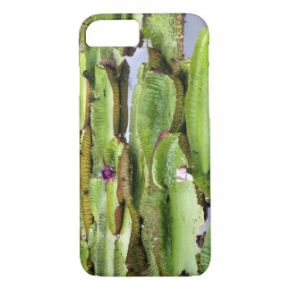 Vitoria Regis, giant water lilies in the Amazon iPhone 8/7 Case