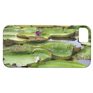 Vitoria Regis, giant water lilies in the Amazon iPhone SE/5/5s Case