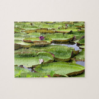 Vitoria Regis, giant water lilies in the Amazon Jigsaw Puzzle