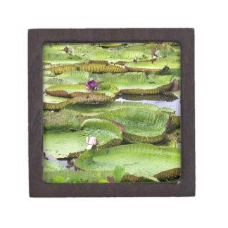 Vitoria Regis, giant water lilies in the Amazon Keepsake Box