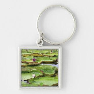 Vitoria Regis, giant water lilies in the Amazon Keychain