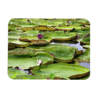 Vitoria Regis, giant water lilies in the Amazon Magnet