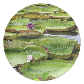 Vitoria Regis, giant water lilies in the Amazon Melamine Plate