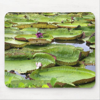 Vitoria Regis, giant water lilies in the Amazon Mouse Pad
