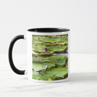 Vitoria Regis, giant water lilies in the Amazon Mug