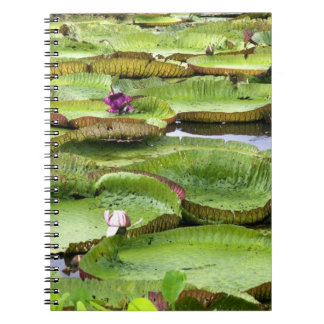 Vitoria Regis, giant water lilies in the Amazon Notebook