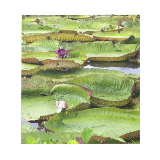 Vitoria Regis, giant water lilies in the Amazon Notepad