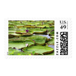 Vitoria Regis, giant water lilies in the Amazon Postage