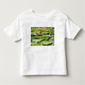 Vitoria Regis, giant water lilies in the Amazon Toddler T-shirt