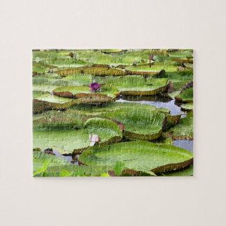 Vitoria Regis, lirios de agua gigantes en el Amazo Puzzles