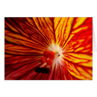Vitraux feu greeting card