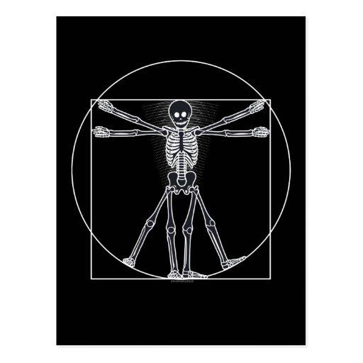 Vitruvian Skeleton Dark Postcards