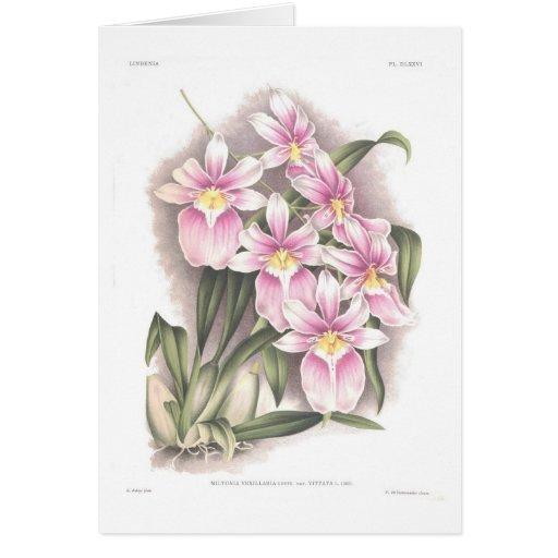 Vittata del var del vexillaria del Miltonia Tarjeta De Felicitación
