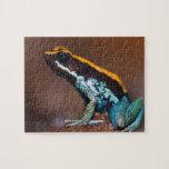 Vittatus de Phyllobates, una rana de la flecha del Rompecabezas Con Fotos