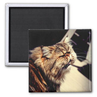 Vittles! Now! 2 Inch Square Magnet