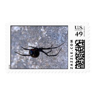 Viuda negra 296 sello