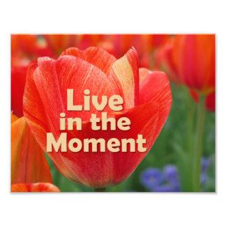 Viva en el tulipán del momento w/vibrant fotografía