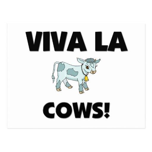 Viva La Cows Post Card