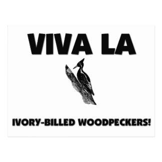 Viva La Ivory-Billed Woodpeckers Postcard