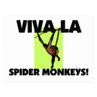 Viva La Spider Monkeys Postcard