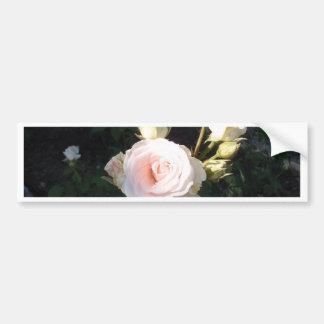 Vivaldi Hybrid Tea Rose Bumper Sticker