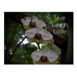 Vive la Amor-Orquídea de la risa Postal