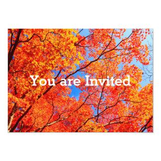 Vivid Autumn Orange Maple Leaves Fall Blue Sky Card