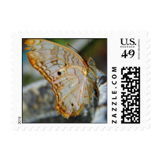 Vivid Butterfly Stamp