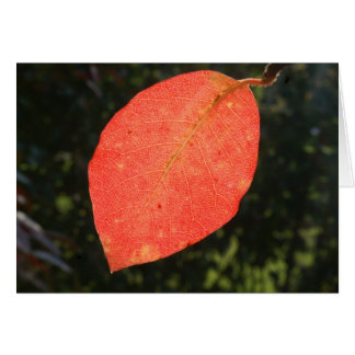 Vivid colours of autumn card