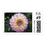 Vivid Lavender Creme Dahlia Postage Stamp