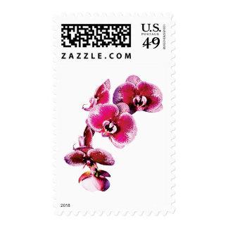Vivid Maroon Phalaenopsis Orchids Postage