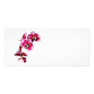 Vivid Maroon Phalaenopsis Orchids Rack Card