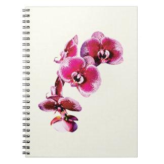 Vivid Maroon Phalaenopsis Orchids Spiral Notebook
