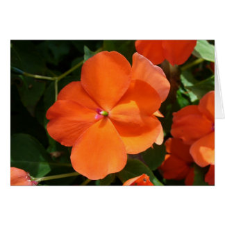 Vivid Orange Vermillion Impatiens Flower Card