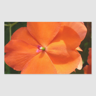 Vivid Orange Vermillion Impatiens Flower Rectangular Sticker