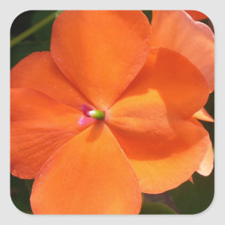 Vivid Orange Vermillion Impatiens Flower Square Sticker