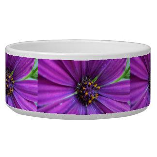 Vivid Purple Daisy Bowl