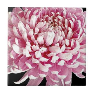 Vivid Purple Flower Tile