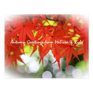 Vivid Red Autumn Maple Leaves White Bokeh Fall Post Card
