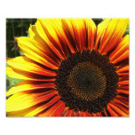 Vivid Sunflower Closeup 10x8 Photograph